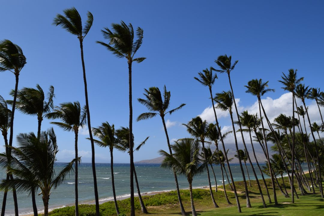 View from Lanai to Right